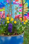 Lente bloemen op pot
