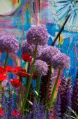 Allium in stadstuin