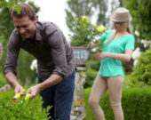Man pruning Buxus sempervirens
