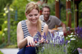 Woman cutting lavender