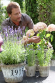 Man plant Hydrangea