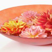 Dahlias in bowl