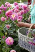 Vrouw plukt zomerbloemen