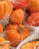 Pumpkins, Physalis