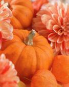 Autumn still