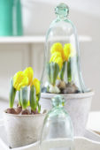 Tulipa Yellow Baby