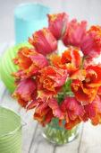 Tulipa Amazing Parrot