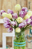 Tulipa Creme Flag, Flaming Flag