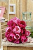 Tulipa Don Juan, Rosalie