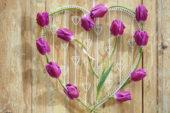 Tulipa Purple Flag