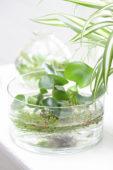 Water planten