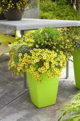 Summer plants on pot