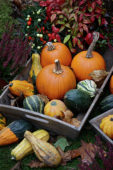 Pumpkins and gourds assortment