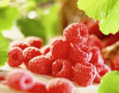 Rubus idaeus