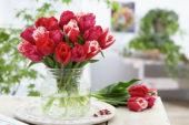 Tulipa gemengd