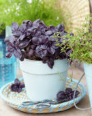 Mixed herbs, basil