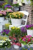 Eenjarigen en vaste planten op potten