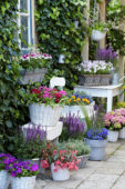 Annuals and perennials on pots