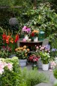 Flowering summer bulbs