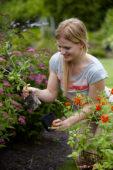 Vrouw plant Geum in border