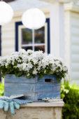 Campanula Spring Bell ® White