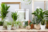 Indoor plants assortment