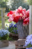 Tulipa Delight mix