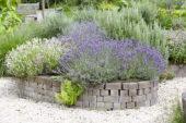 Lavendel border