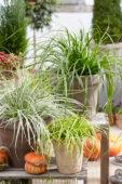 Carex EverColor® collectie