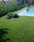 Lawn with swimming pool