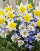 Spring bulbs mixed