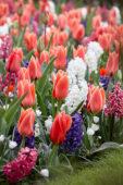 Spring flower mixture