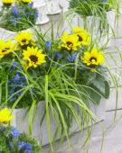Carex EverColor® Everlime