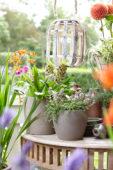 Summer flowers on pot