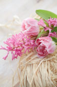 Hyacinthus Johanna, Tulipa Endless Love