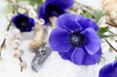 Anemone Mistral Blue