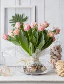 Tulipa Queensland bollenbos