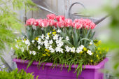 Spring container