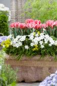 Voorjaarsbollen op pot