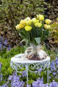 Tulipa Foxy Foxtrot bollenbos