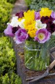 Tulipa crispa bouquet