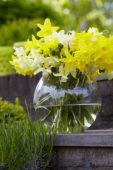Narcissus Sensation bouquet