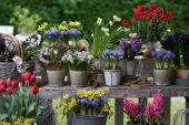 Voorjaarsbloemen collectie