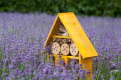 Insect hotel in lavender field