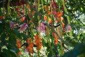 Zomerbloemen aan tak