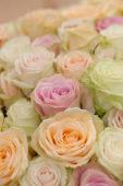 Pastel rozen