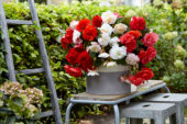 Begonia Cascade Odorosa White Blush, Red Sunset and Sweet Pink