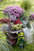 Summer collection on wheelbarrow