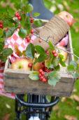 Fietskratje met fruit