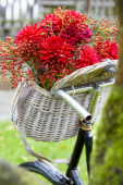 Flowers in bicycle basket